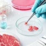 Argentina logra producir carne cultivada